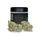 Greenshock-Flower-Sativa-Tropical-Sleigh-Ride-L11478